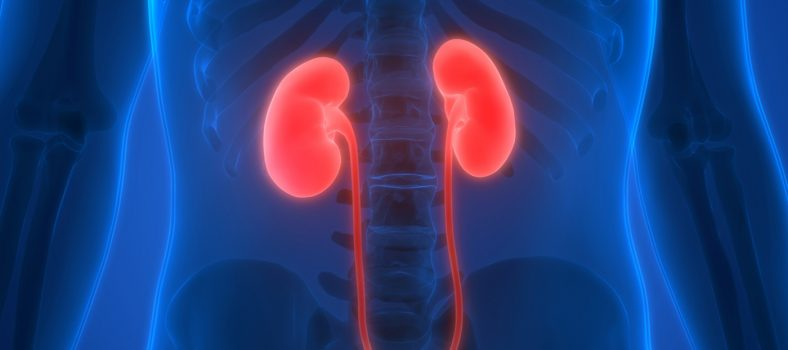 Featured image New hope for kidney revival for transplant