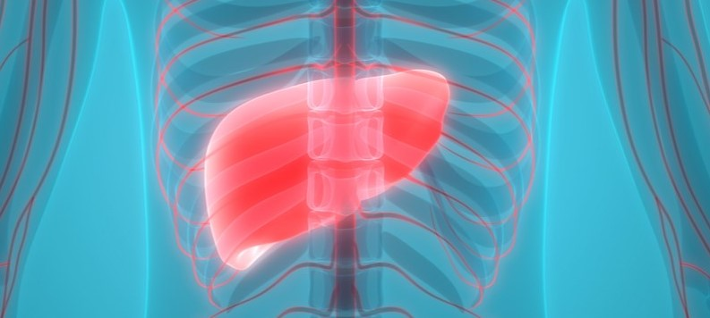 Graphic image of the human body, showing the liver